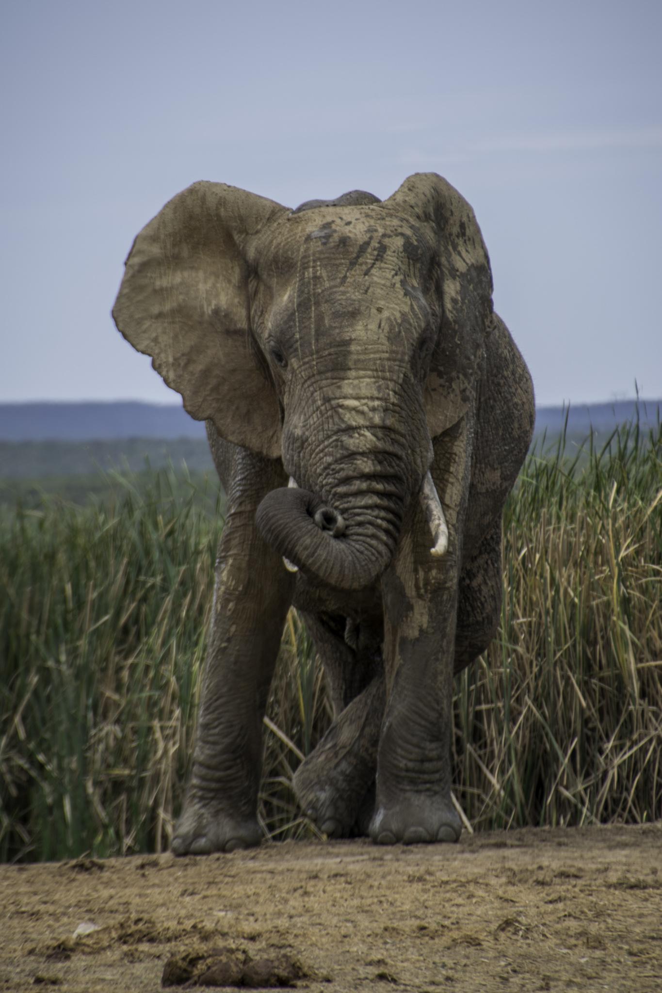 Der wohl coolste Elefant Afrikas!