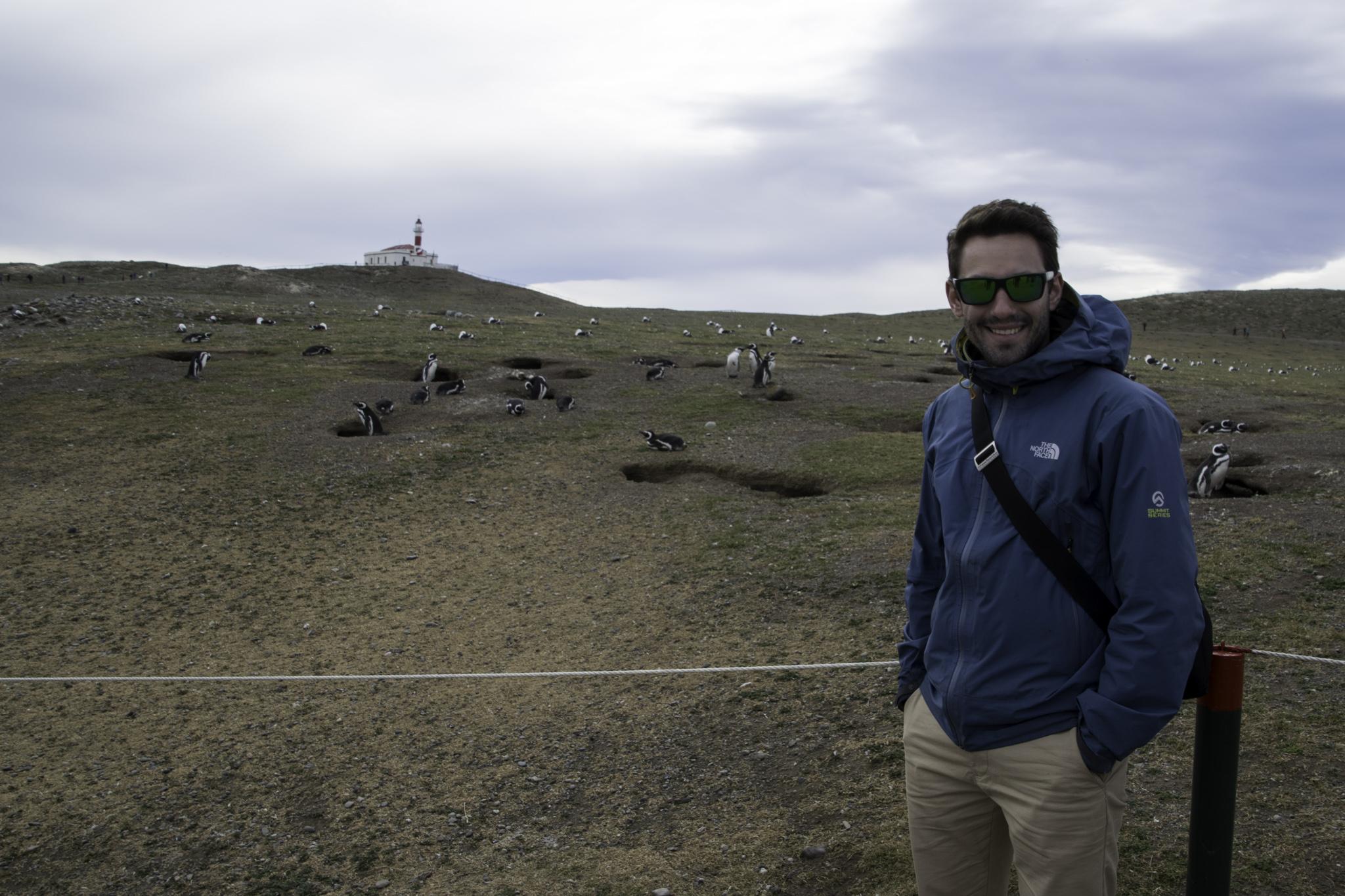 Die Pinguine buddeln Nisthöhlen als Windschutz
