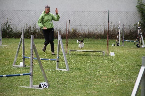 Anneliese mit Babbels - Jumping