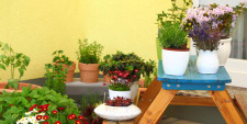 How To Container Garden