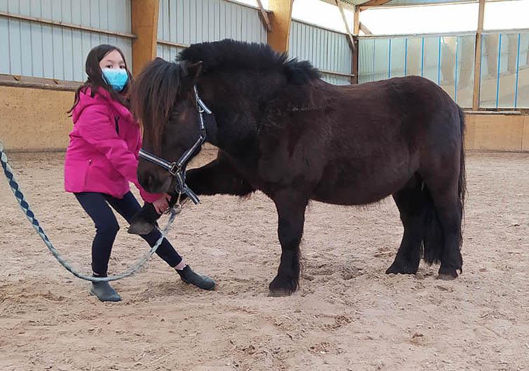 Initiation au Shiatsu poneys avec Isabelle Audinet