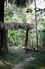 Gate to the jungle