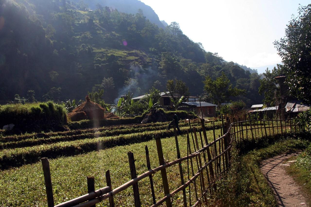 le paysage agricole