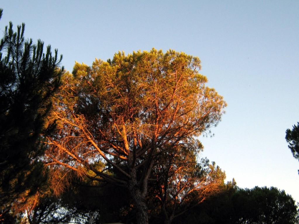 BIZANET - camping sous les pins