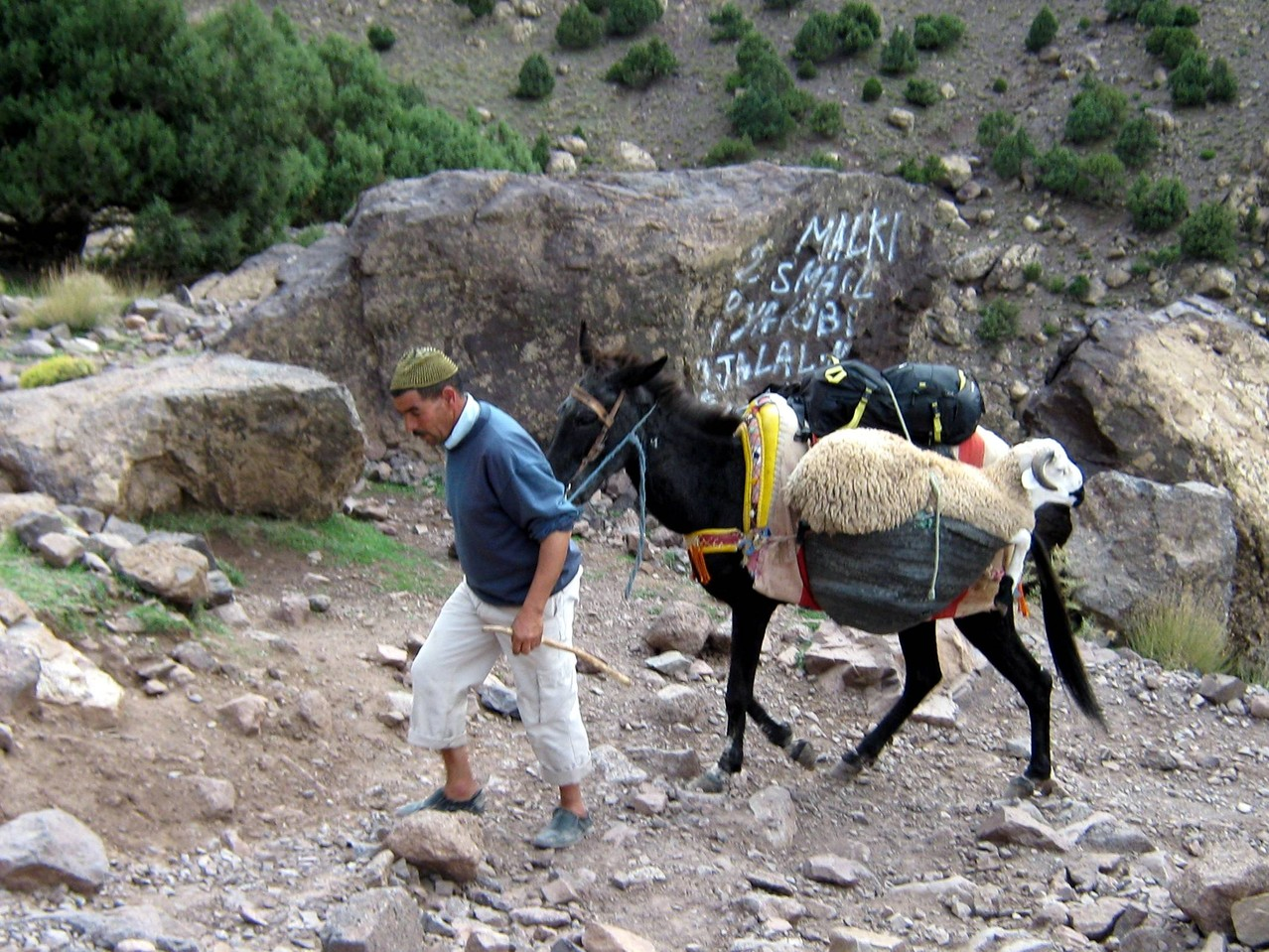 dernier voyage pour les moutons : demain, c'est fête ....