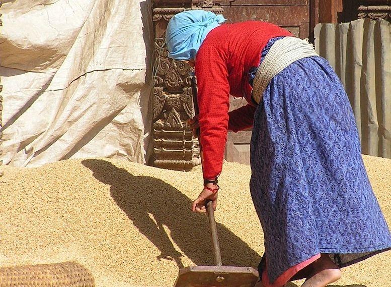 KTM - en ville : séchage du riz