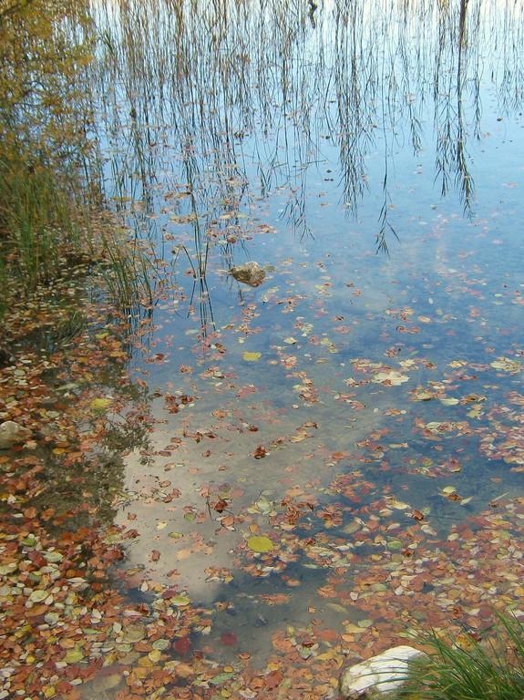 Automne : le long des lacs ...