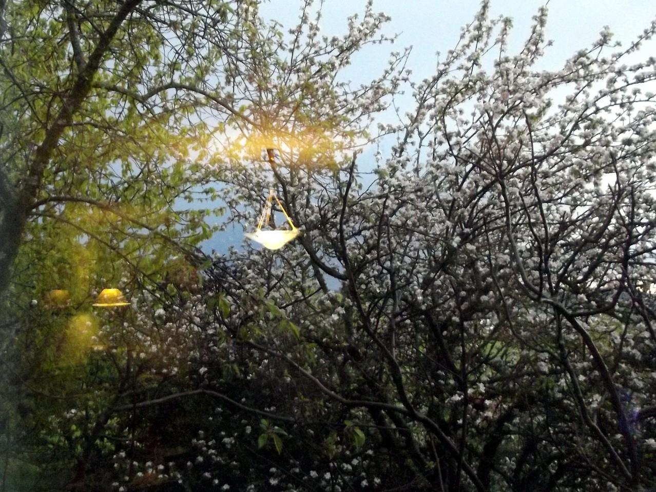 Printemps - Reflets de luminaires sur la vitre du salon et les arbres en fleurs