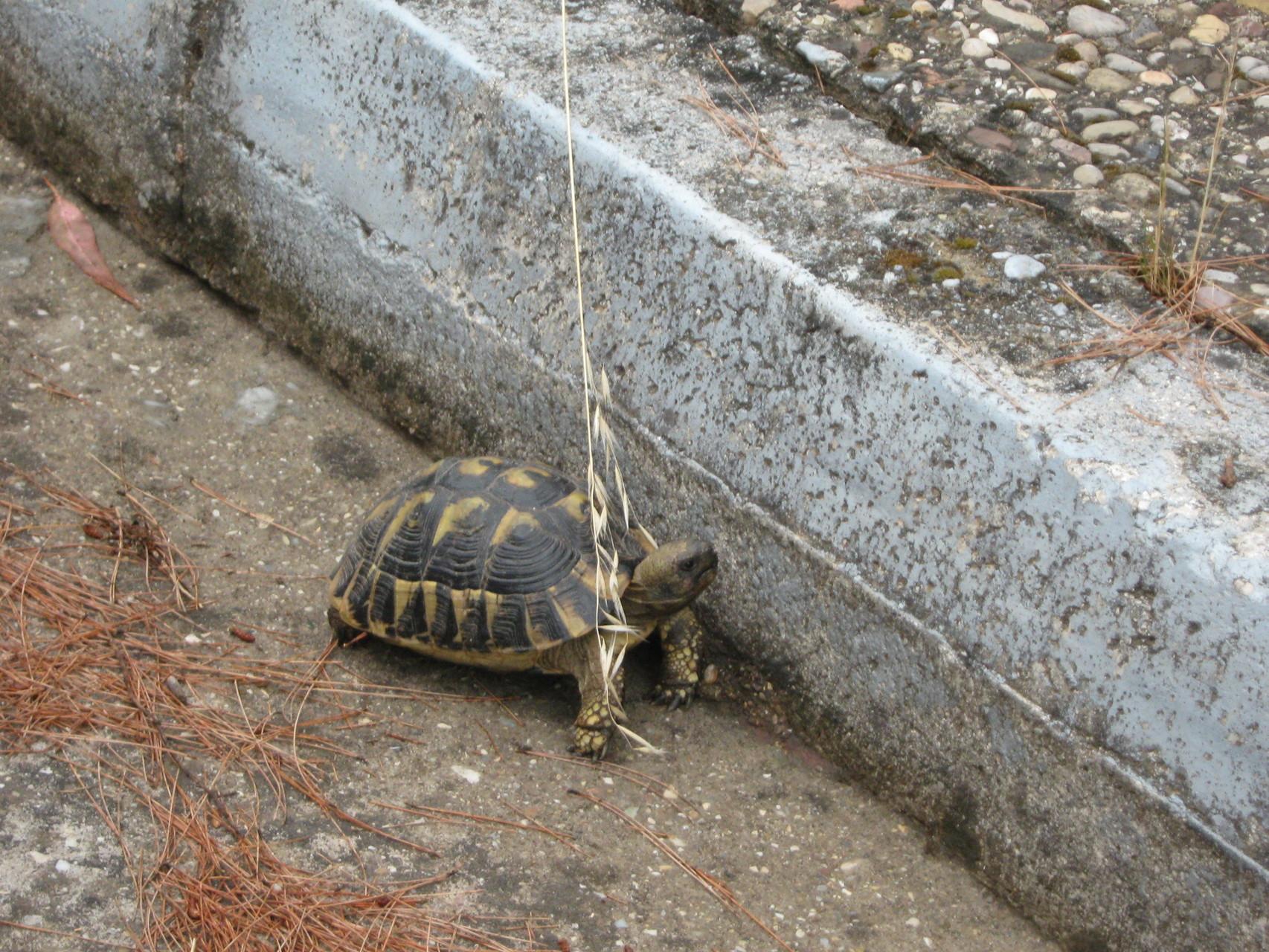 sauvetage d'une tortue égarée sur la route ...