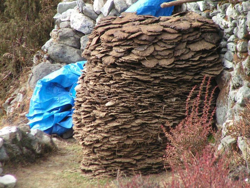 provisions pour l'hiver : bouses de yak