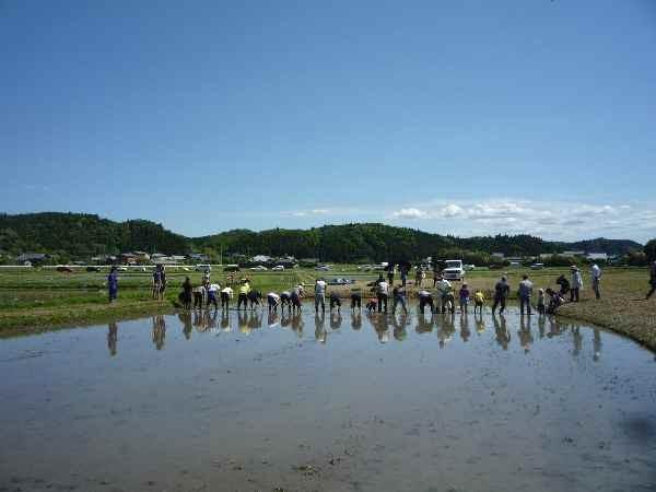 5月17日(土)に快晴の中、常陸太田プロジェクトの田植をしました。