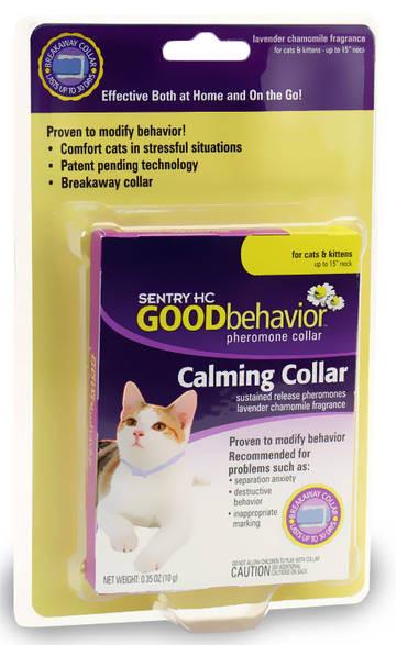 cat kitten rescue greenville sc