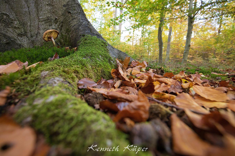 November 2020 - Pilz im Herbstwald