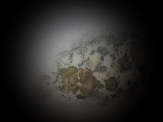 Schadenfall; Pilz in der Einrahmung