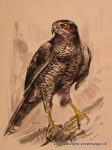 Raubvogel; Aquarell von R. Guatelli