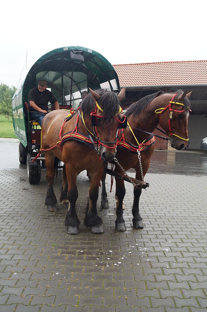 25 - Die Pferde warten geduldig.