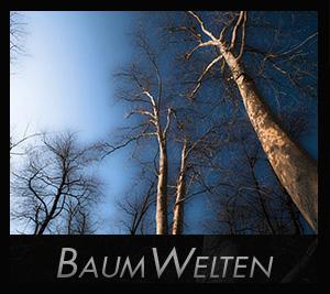 BaumWelten  - aapedition