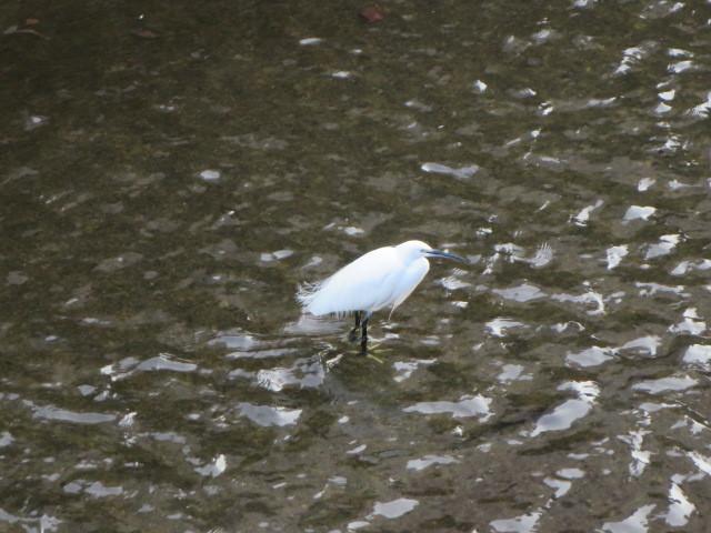 リハーサルに向かう途中に見た鳥と水。自然の美しさ…人も、元々持っていて。