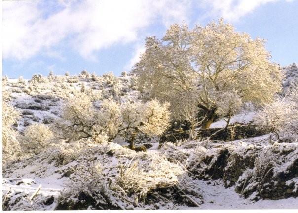 Karlı bir bayram günü yukarı kavak...