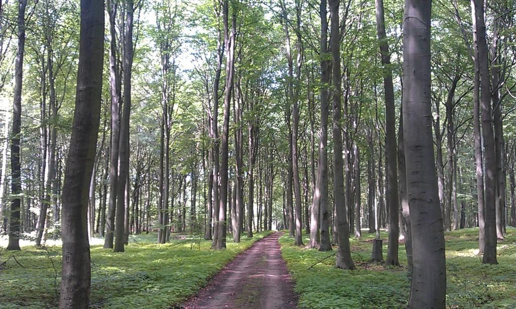 was für ein Wald