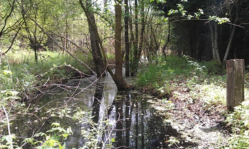 Abfluss Waldsee