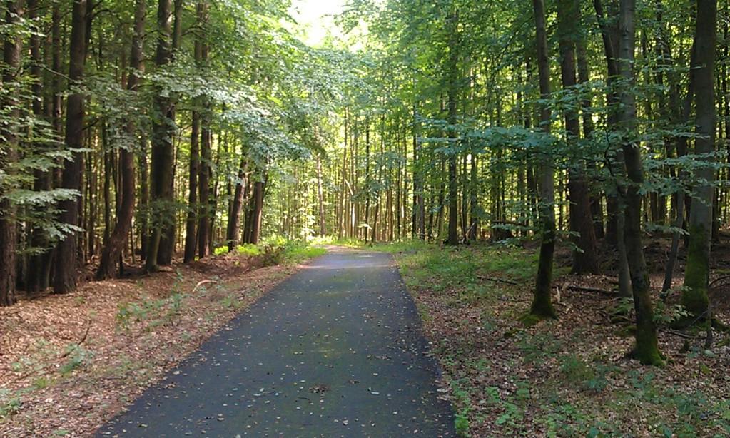 in Brandenburgs Wäldern
