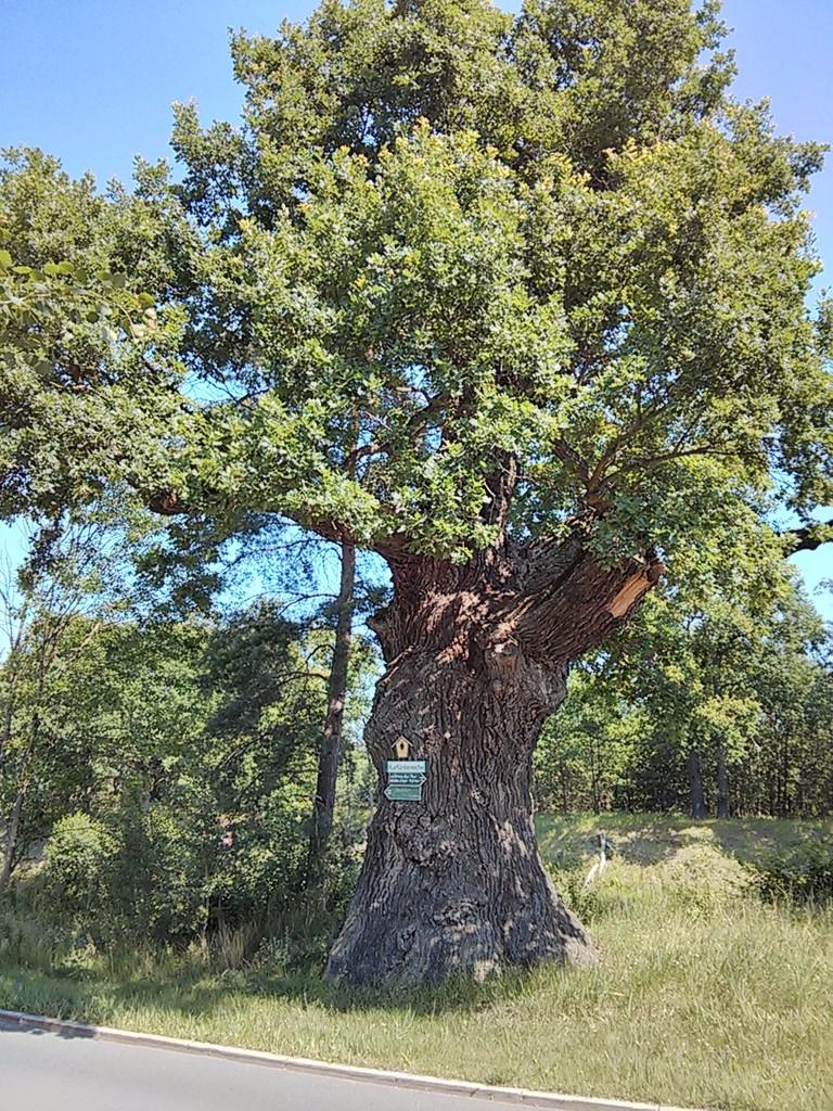uriger Baum