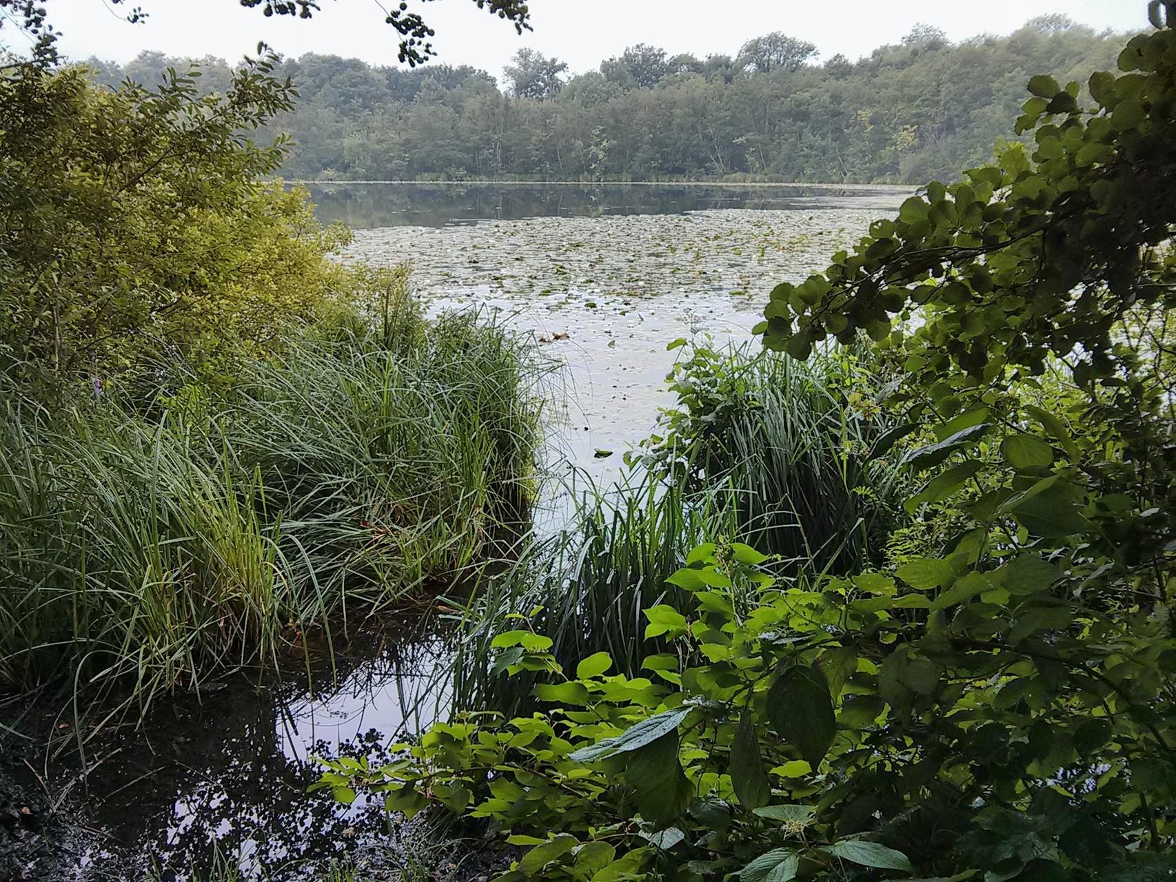 Fauler See