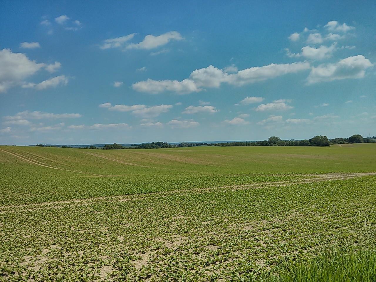 viel Felder