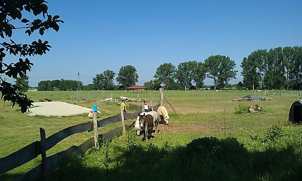 Ponyhof und Streichelzoo