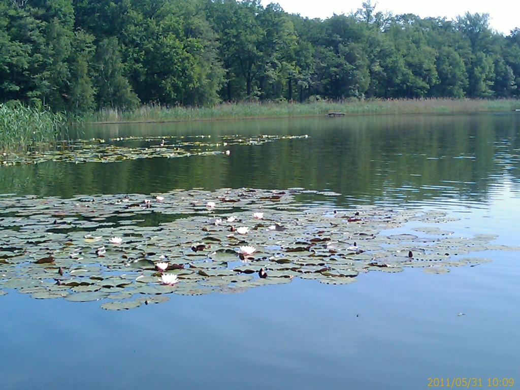 Natur auf dem Wasser