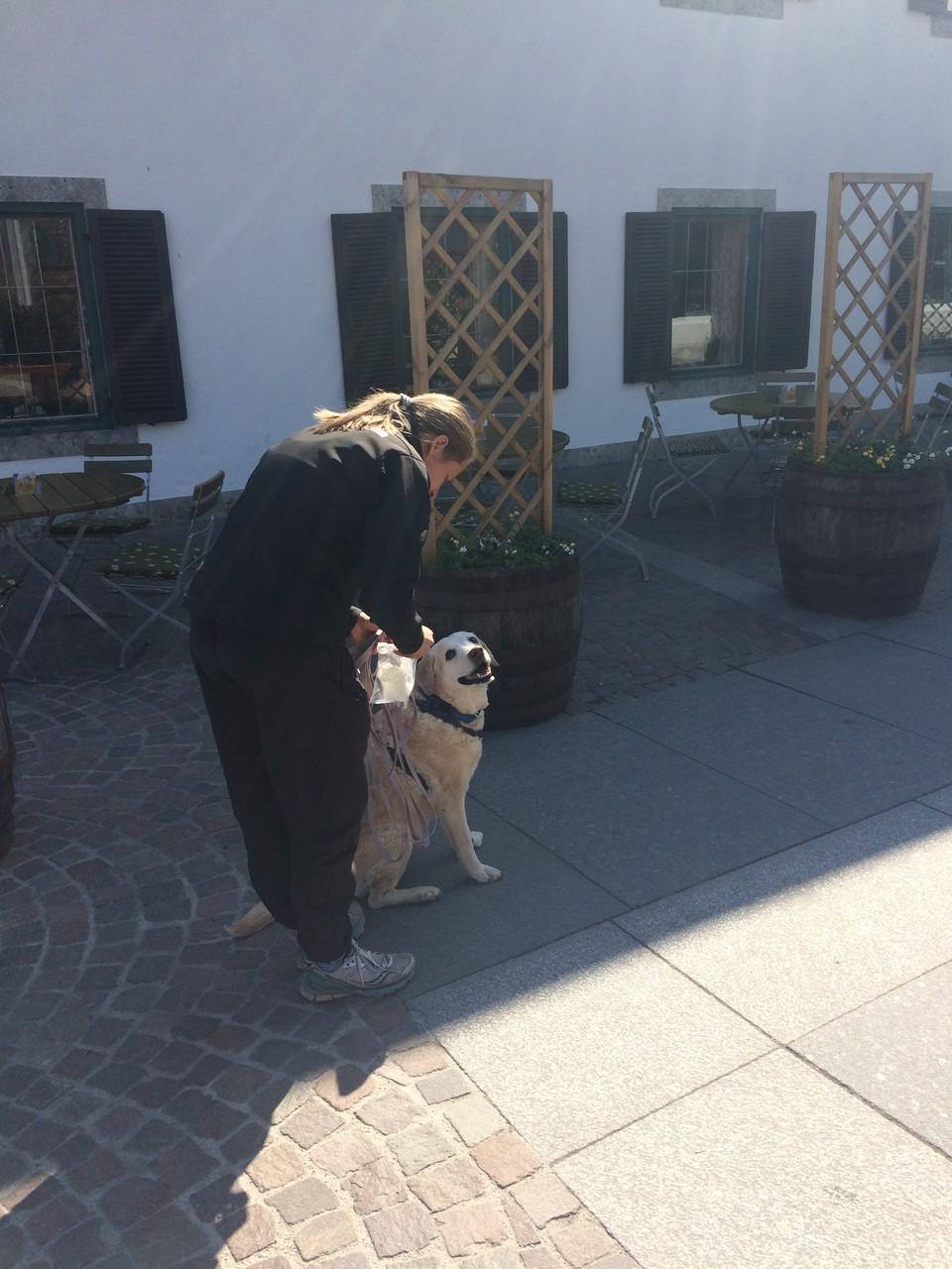 Trailen auf Asphalt - eine Herausforderung für Mensch und Hund