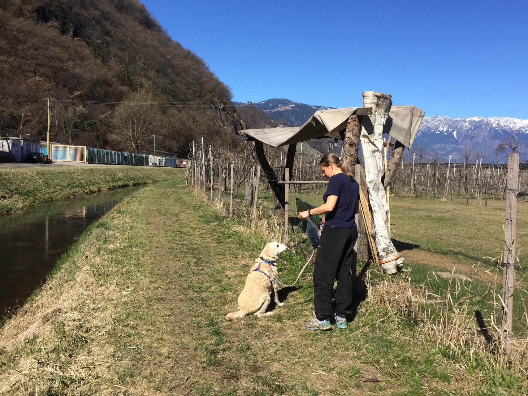 Die 13-jährige Bijou liebt das Trailen!