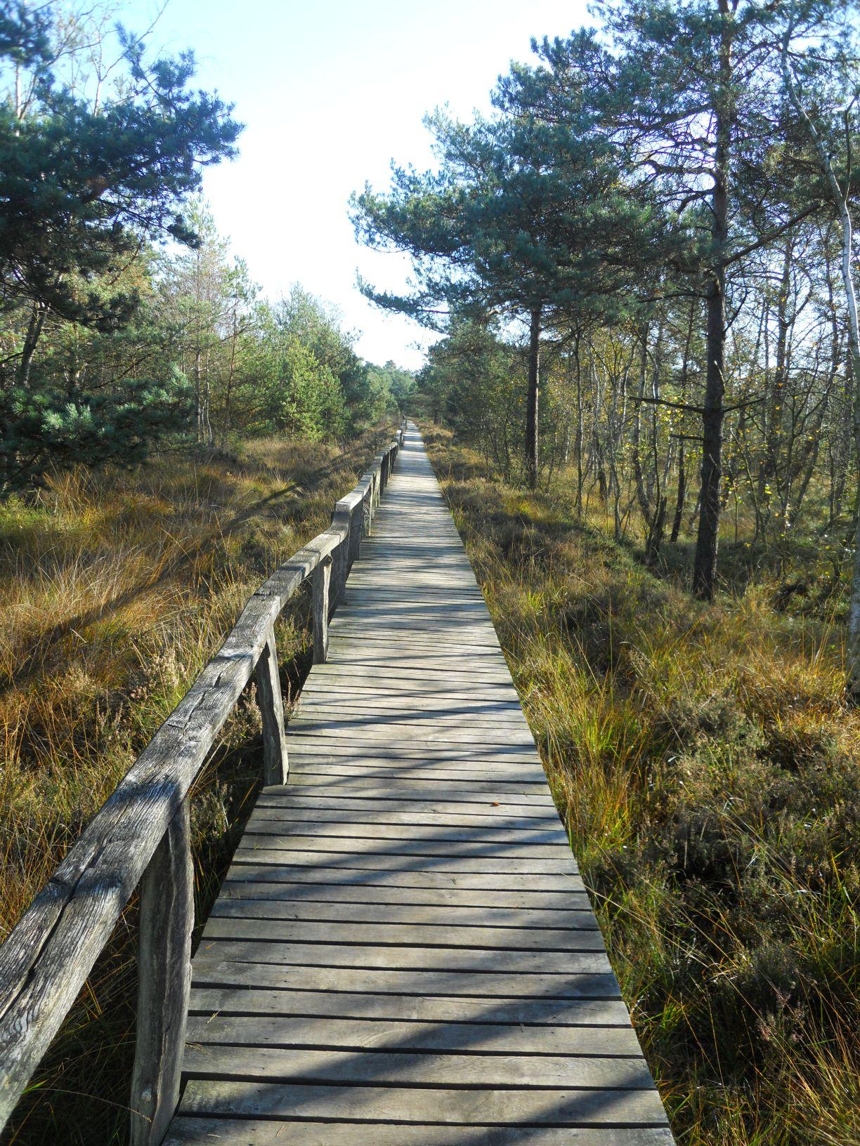 Lüneburger Heide Moorpfad