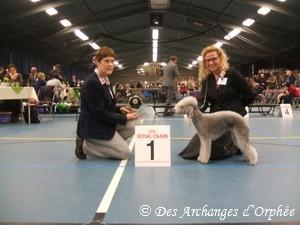 Olga et son trophée du Bedlington club des Pays-Bas.
