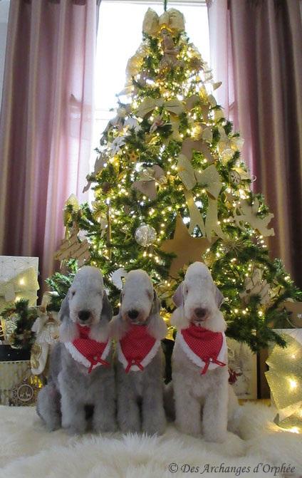Cliquez sur la photo pour accéder à la rubrique de Noël des Miss