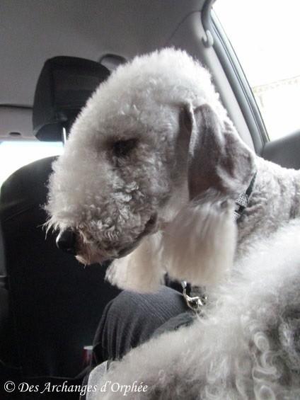 Olga dans le taxi, épuisée de sa journée VIP.