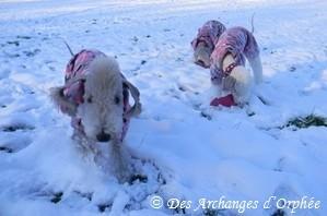 Décembre 2012 sous la neige