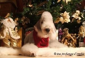 ♥ Olga sous le sapin de Noël.♥