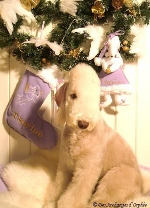 ♥ Premier Noël de Tsarine ♥