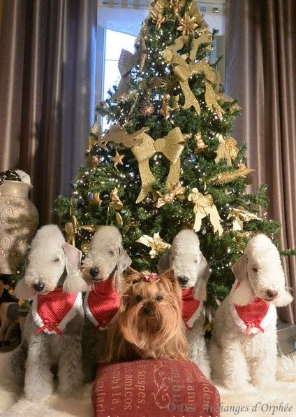 Cliquez sur la photo pour accéder au Noël des Archanges