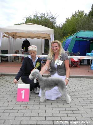 Olga - 1ère Excellent et Ch. Jeune du Terrier Club d'Allemagne (KfT) à la NE de Bensheim jugée par Mme Cornelia Bergundthal (Suisse).