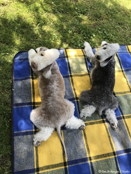 Tsarine & Olga - sieste du 19 mai 2020 à l'ombre.