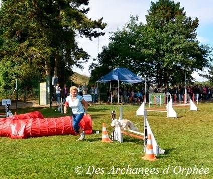 Cliquez sur le lien pour accéder au photo du concours d'agility de Tsarine