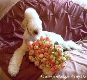 ♥ Tsarine ♥  Avril 2013