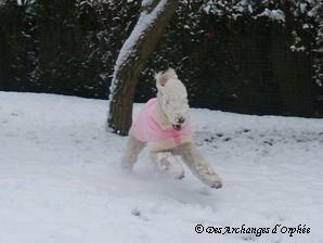♥ Premiere neige pour Tsarine ♥