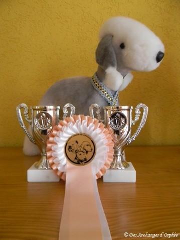 Les détails dans la rubrique Exposition / dog show (cliquez sur la photo pour accéder à la rubrique).