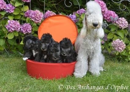 Olga et ses bébés 5 semaines