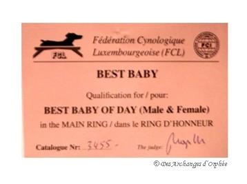 BEST BABY - CACIB du Luxembourg jugé par Mme Korosec Maja (Slovénie).