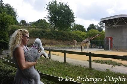 Girafes.